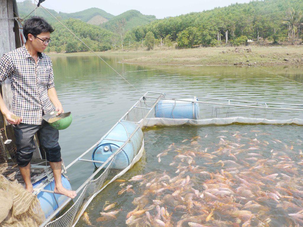 kỹ thuật nuôi cá diêu hồng