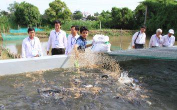 cách nuôi cá nước ngọt
