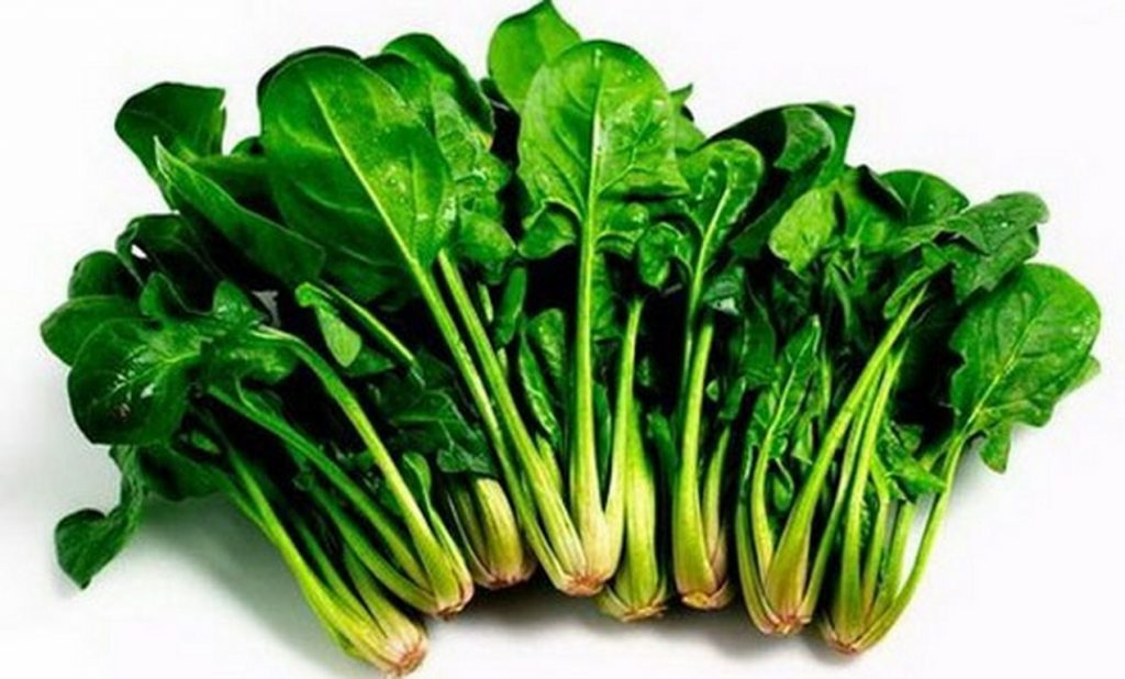 trồng rau cải