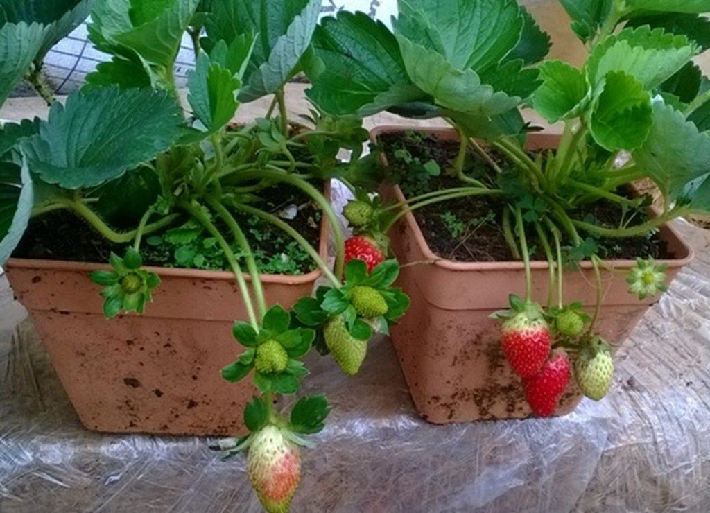 trồng cây trong chậu