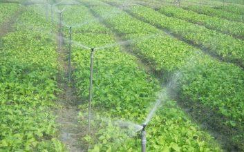 trồng rau sạch