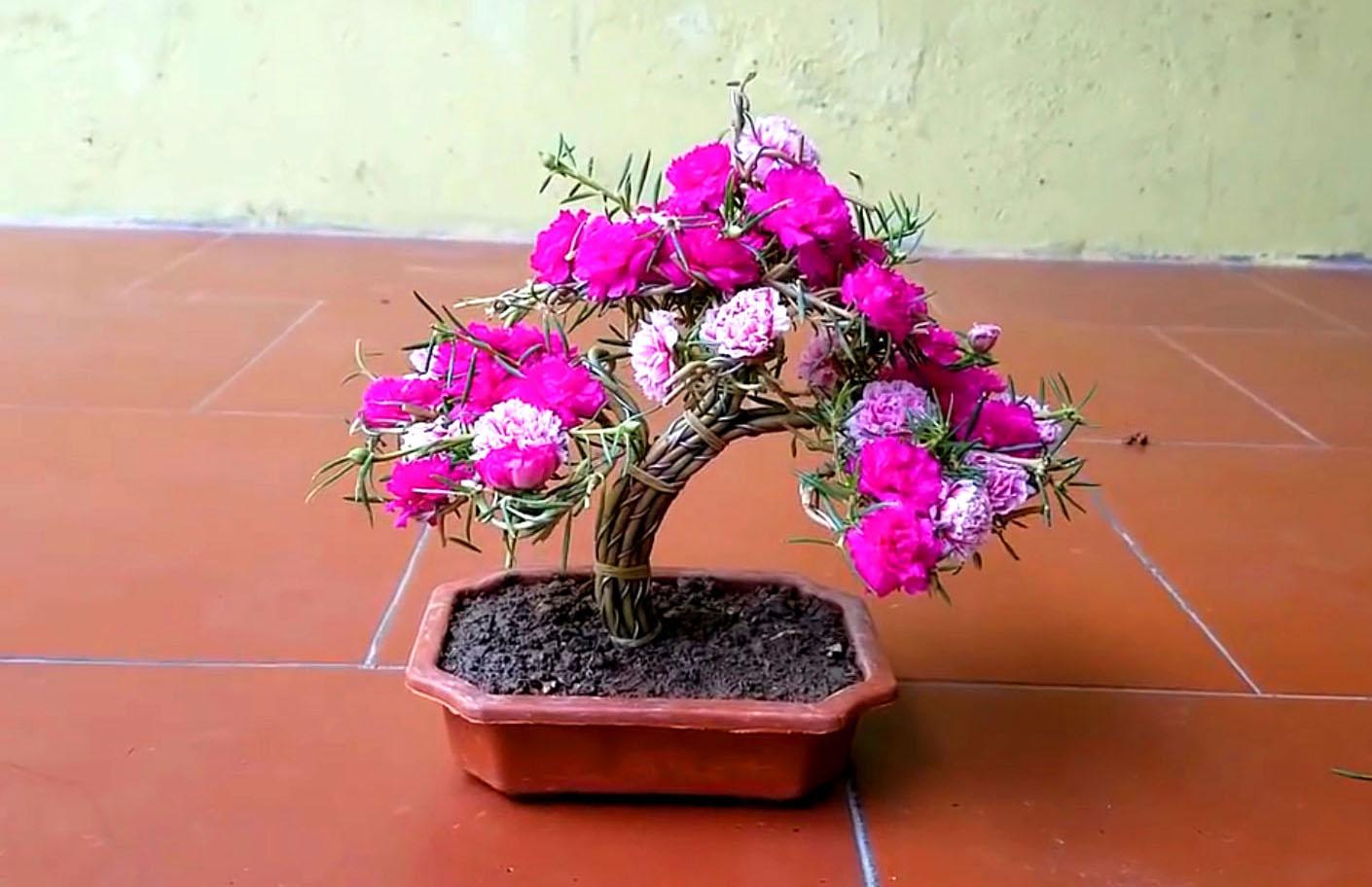 Một số mẫu trồng hoa mười giờ sáng tạo